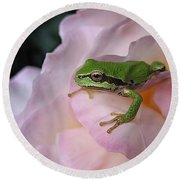 Frog And Rose Photo 3 Round Beach Towel