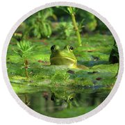 Frog Round Beach Towel by Douglas Stucky
