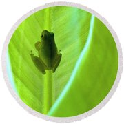 Round Beach Towel featuring the photograph Frog In Blankie by Faith Williams