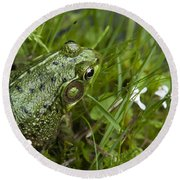 Frog On Water's Edge Round Beach Towel by Christina Rollo