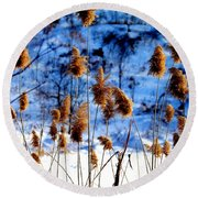 Fronds In Winter Round Beach Towel by Eleanor Abramson