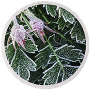 Frost On Plants In Late Fall Round Beach Towel