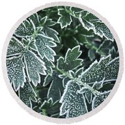 Frosty Leaves In Late Fall Round Beach Towel