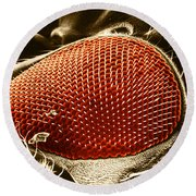 Fruit Fly Eye Sem Round Beach Towel