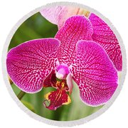 Fuchsia Moth Orchid Round Beach Towel by Rona Black