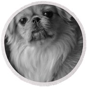 Round Beach Towel featuring the photograph Fuzzface by Kristi Swift