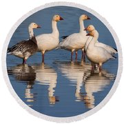 Gaggle Of Snow Geese Reflected Round Beach Towel