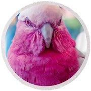 Galah - Eolophus Roseicapilla - Pink And Grey - Roseate Cockatoo Maui Hawaii Round Beach Towel by Sharon Mau