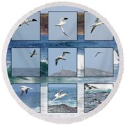 Gannets Galore Round Beach Towel by Terri Waters