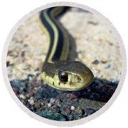 Garter Snake Round Beach Towel