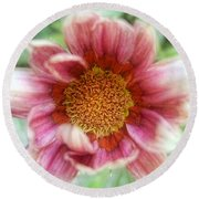 Treasure Flower Gazania Round Beach Towel by Louise Kumpf