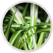 Gecko Camouflaged On Spider Plant Round Beach Towel by Connie Fox