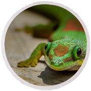 Gecko Portrait Round Beach Towel