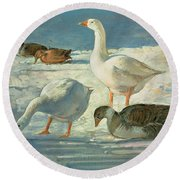 Geese And Mallards, 2000 Oil On Canvas Round Beach Towel
