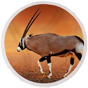 Gemsbok On Desert Plains At Sunset Round Beach Towel