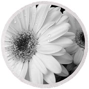 Gerber Daisies In Black And White Round Beach Towel