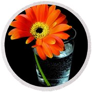 Round Beach Towel featuring the photograph Gerbera Daisy In Glass Of Water by Nina Ficur Feenan