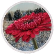 Gerbera Daisy In The Snow Round Beach Towel