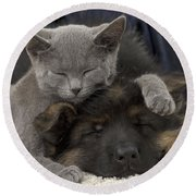 German Shepherd And Chartreux Kitten Round Beach Towel