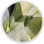 Giant Agave Abstract 3 Round Beach Towel