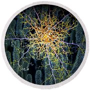 Round Beach Towel featuring the photograph Giant Basket Star At Night by Amy McDaniel