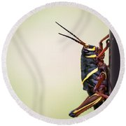 Giant Eastern Lubber Grasshopper Round Beach Towel