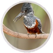Giant Kingfisher Megaceryle Maxima Round Beach Towel