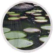 Round Beach Towel featuring the photograph Giant Lily Pads by Shoal Hollingsworth