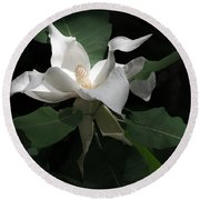 Giant Magnolia Round Beach Towel