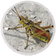 Round Beach Towel featuring the photograph Giant Orange Grasshopper by Ron Davidson