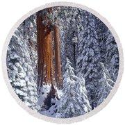 Giant Sequoia Trees Sequoiadendron Round Beach Towel