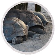 Round Beach Towel featuring the photograph Giant Tortise by Robert Meanor