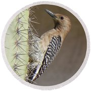 Round Beach Towel featuring the photograph Gila Woodpecker by Deb Halloran