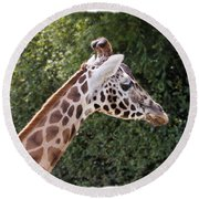 Giraffe 01 Round Beach Towel