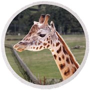 Giraffe 02 Round Beach Towel