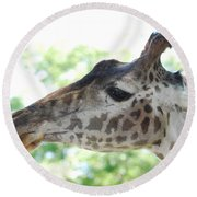 Giraffe Chewing On A Tree Branch Round Beach Towel by DejaVu Designs