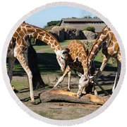 Giraffe Dsc2870 Round Beach Towel