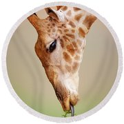 Giraffe Eating Close-up Round Beach Towel