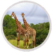 Giraffe Males Before The Storm Round Beach Towel