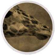 Giraffe Portait Round Beach Towel by Dan Sproul