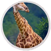 Giraffe Portrait Closeup Round Beach Towel