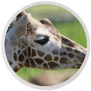 Giraffe Portrait Round Beach Towel by Dan Sproul