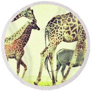 Giraffes And A Zebra In The Mist Round Beach Towel
