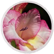 Gladiolus In Pink Round Beach Towel