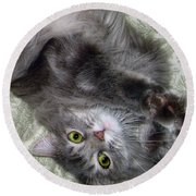 Round Beach Towel featuring the photograph Glamor Puss by Louise Kumpf