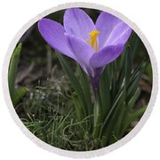Round Beach Towel featuring the photograph Glorious Crocus by Betty Denise