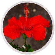 Glowing Red Hibiscus Round Beach Towel