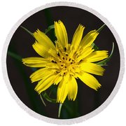 Goats Beard Flower Round Beach Towel