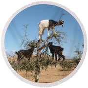 Goats In A Tree Round Beach Towel