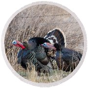 Round Beach Towel featuring the photograph Gobbling Turkeys by Michael Chatt